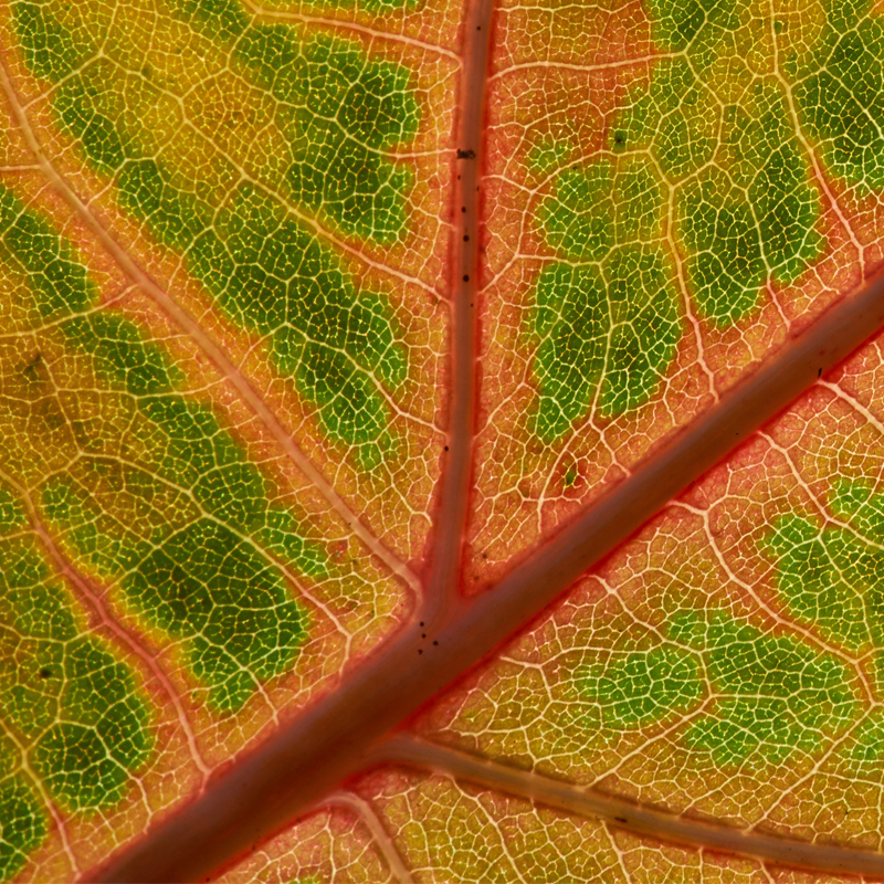 Leaf background image for hotspots